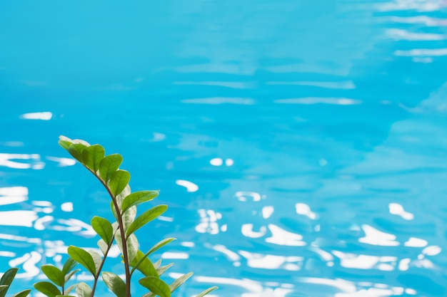 太陽の反射と熱帯の緑と青いプール水が目の前に残します。