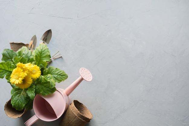 黄色のガーベラ、通行料、庭の花はグレーに植えます。