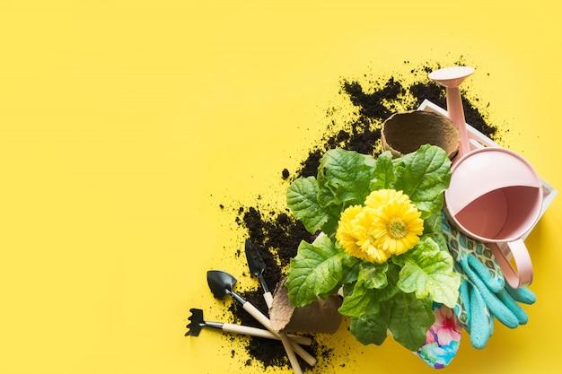 黄色のボックスにガーベラ、通行料および花の植物の園芸。