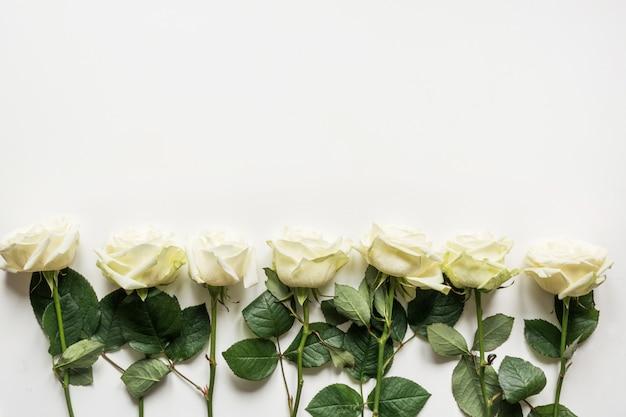 Белые розы как рамка на белом фоне.