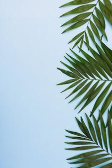 熱帯のヤシは、青の背景にフレームを残します。平置き