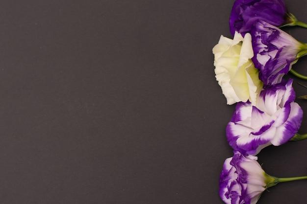 Нежные белые и фиолетовые цветы эустомы на черном фоне, плоская планировка