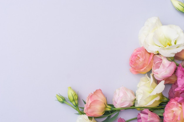 灰色の背景、フラットレイアウトに優しい白とピンクのトルコギキョウの花