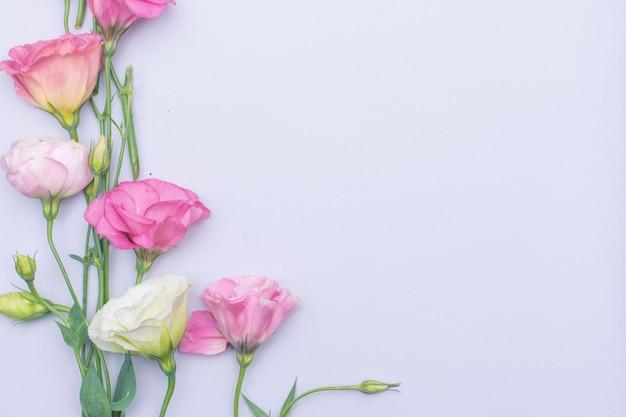 Нежные белые и розовые цветы эустомы на сером фоне, плоская планировка