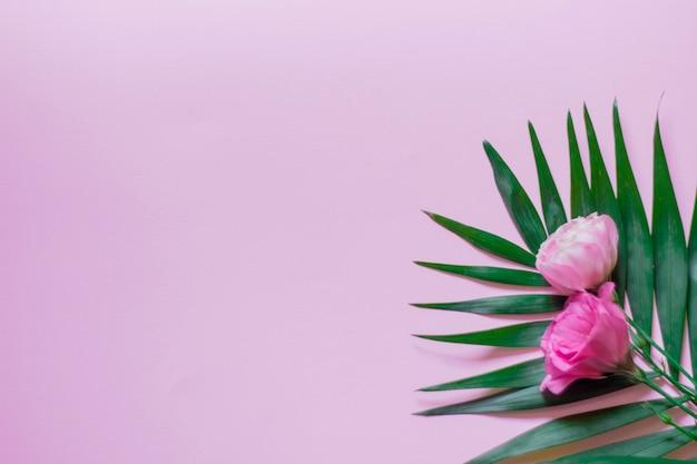 Нежные белые и розовые цветы эустомы на розовом фоне с пальмовыми листьями, плоская планировка