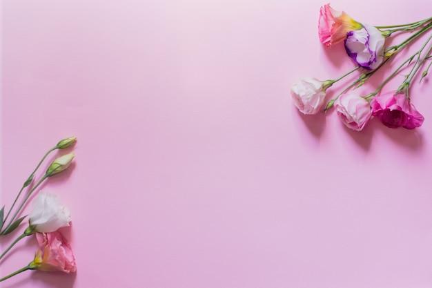 Нежные белые и розовые цветы эустомы на розовом фоне, плоская планировка