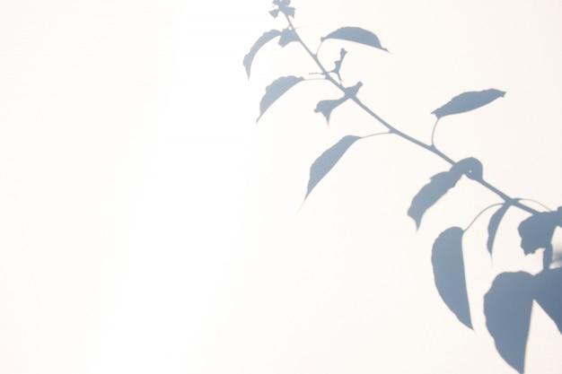 自然の葉の抽象的な灰色の影