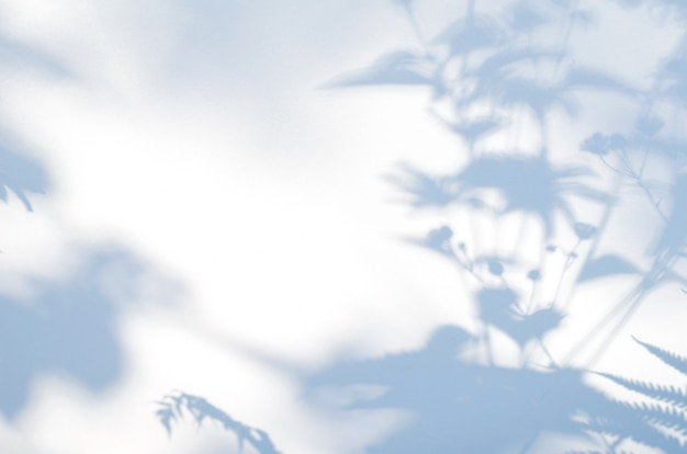 白い半透明の布に花の影