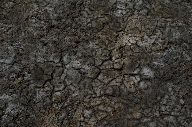 Разноцветная сухая засоленная поверхность почвы с солевыми пятнами и глубокими черными трещинами