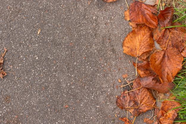 アスファルトの道路にオレンジ色の紅葉