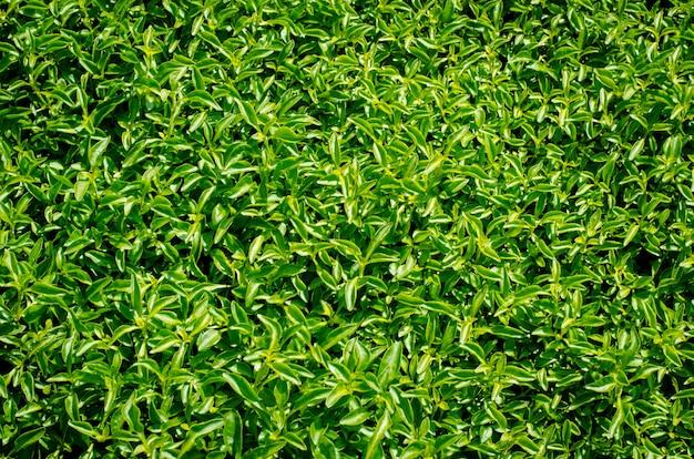 草原の緑のジューシーな草の壁