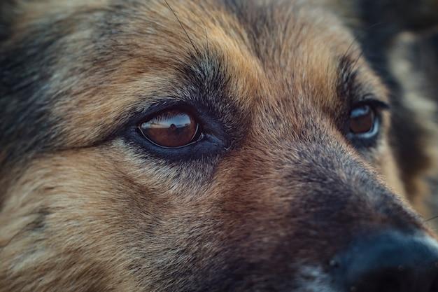 犬の顔をクローズアップ。ホームレスの犬の目
