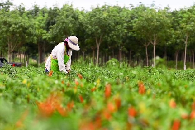 Люди на органической ферме