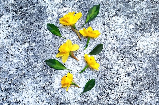 水仙春の黄色い花。