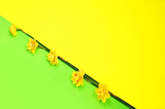 光の黄色い水仙