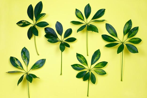 パステルイエローの背景に熱帯の葉