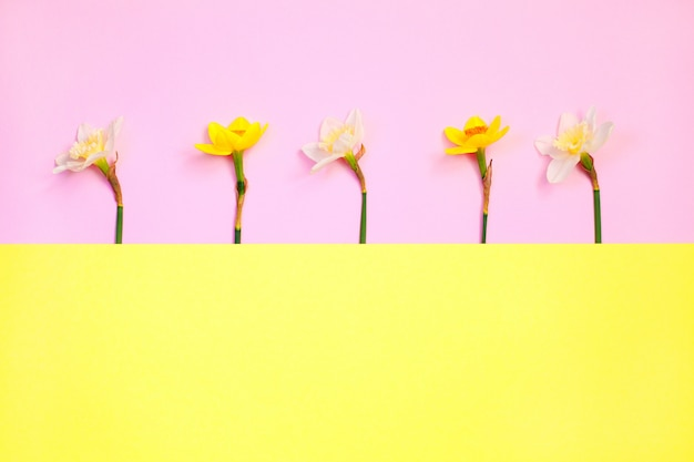 Весенняя композиция из цветов нарцисса