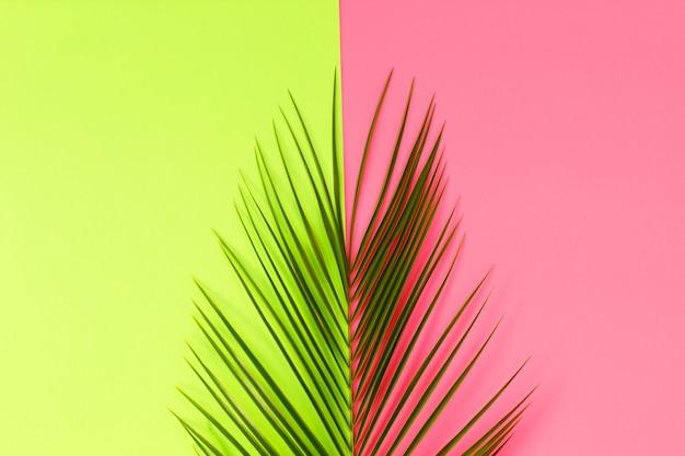 Зеленые листья тропической пальмы