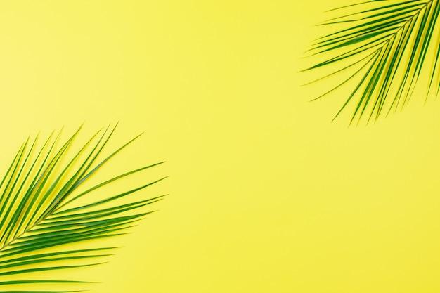 Зеленые тропические листья пальмы на желтом фоне