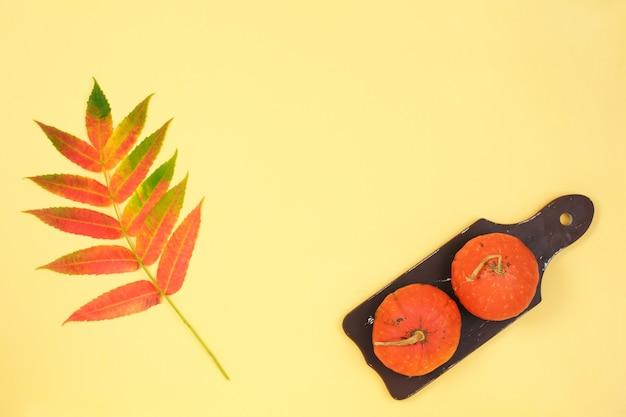 カボチャの乾燥花で作られたフレームの葉色紙の背景