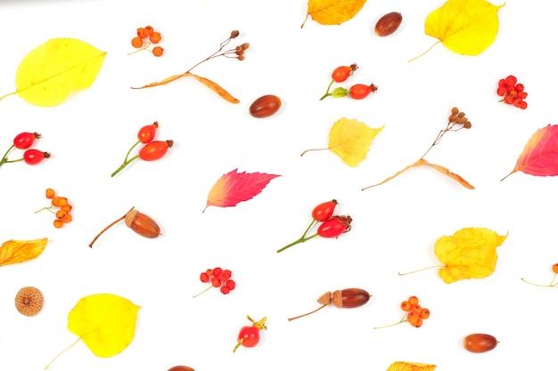 秋の乾燥した葉と白い背景のドングリのパターン