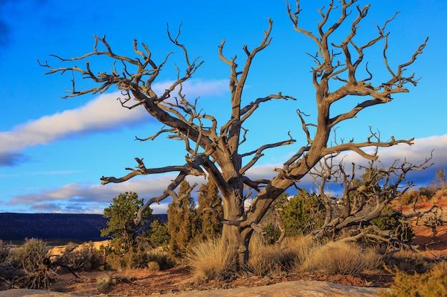 ユタ州の荒野の乾燥木