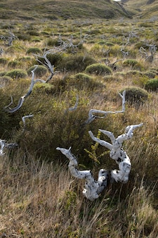 トレスデルパイネ国立公園、チリで乾燥したブランチ