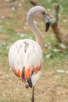 片足で立っているピンクのフラミンゴ