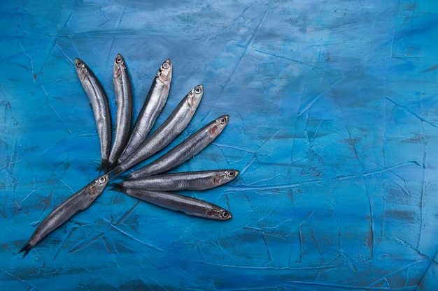 アンチョビのグループが青色の背景に浮かんでいます。釣った魚