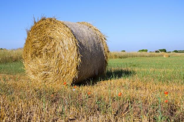 アプリリアの夏の朝の美しい風景の中の干し草の山