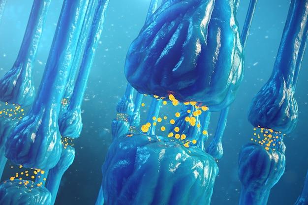 シナプス伝達、人間の神経系
