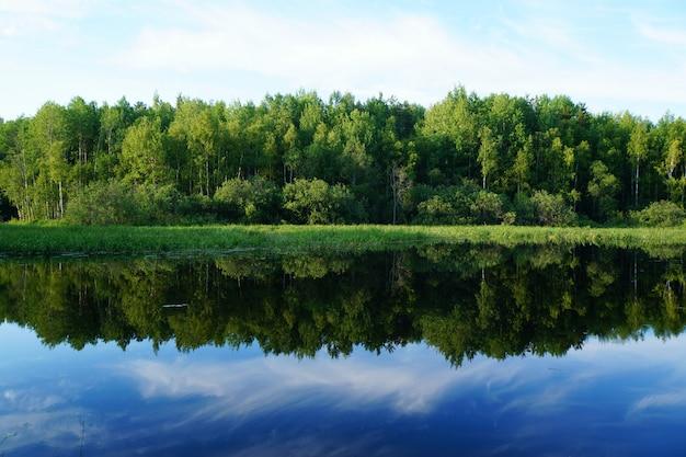 Природа летом. зеленые деревья отражаются в воде.