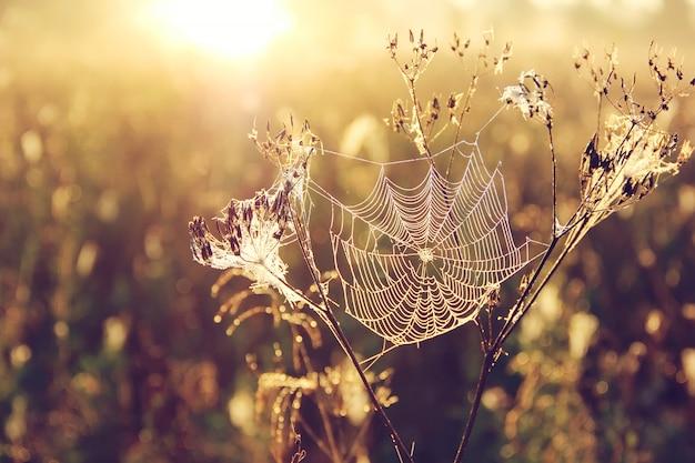 ぼやけた黄金の自然にクモの巣