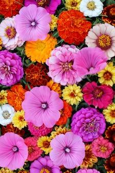 グリーティングカードやポストカードのための美しい花の背景。