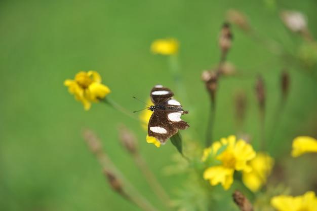 Бабочка в цветочном саду с объективом размытия фона