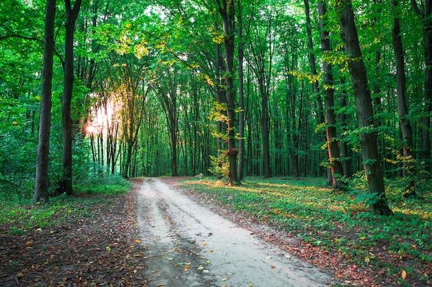森の木。自然の緑の木の日光の背景