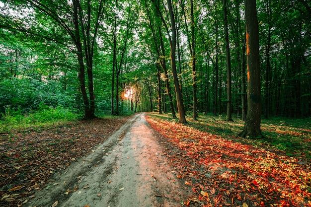 日光と森の木の背景