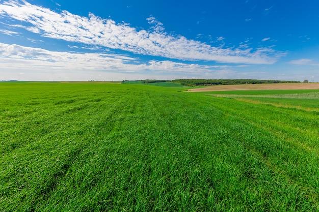緑の野原と美しい夕日