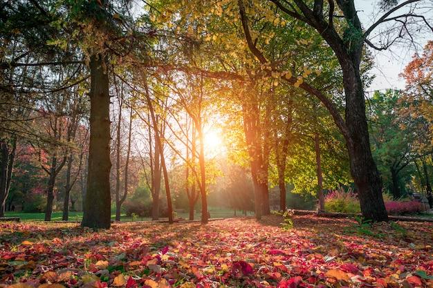 美しい秋の公園。秋の森。