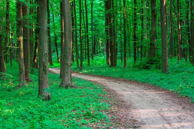 Красивый зеленый лес