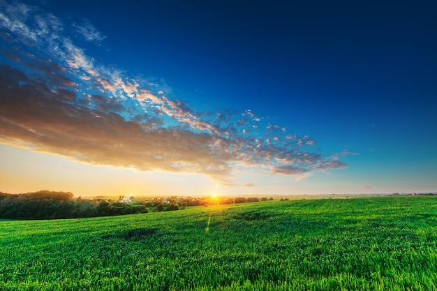 Зеленое поле и красивый закат