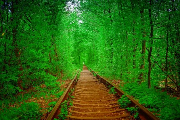 愛の春の森のトンネルの鉄道