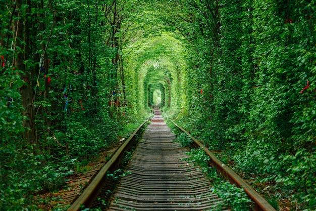 春の森の鉄道。愛のトンネル、緑の木々、鉄道