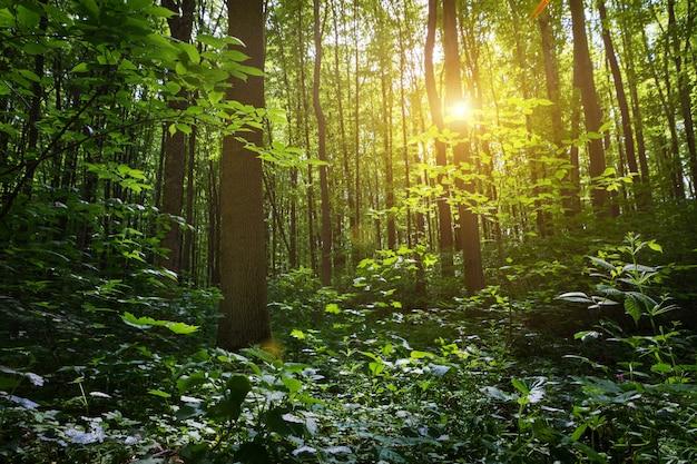 別の木が美しい夏の森