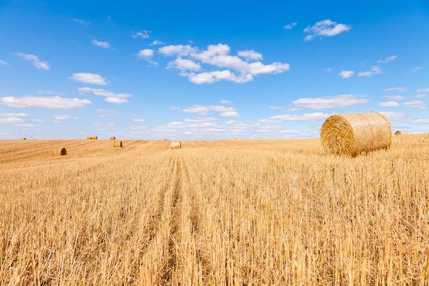 日没時のわら俵収穫後の麦畑