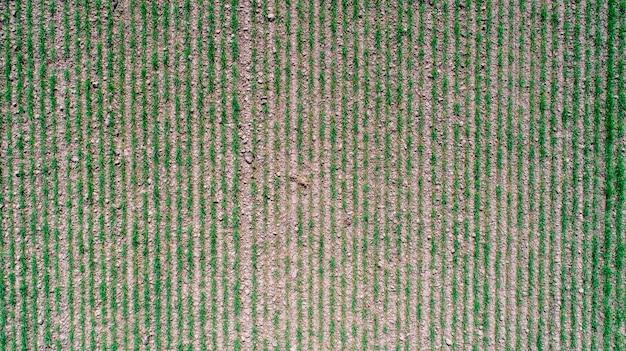 黄色と緑の色でさまざまな作物の農業区画の抽象的な幾何学的図形。フィールドの真上のドローンから空撮