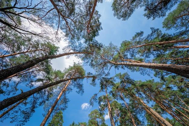 まっすぐな、広げられた森林