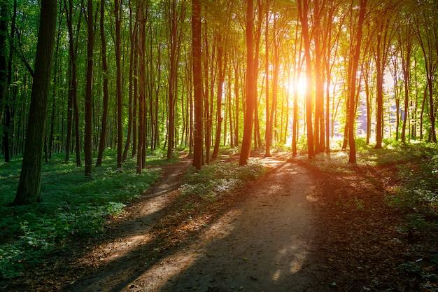 美しい緑の森