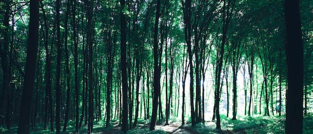 Лесные деревья природа зеленый лес солнечный свет фон