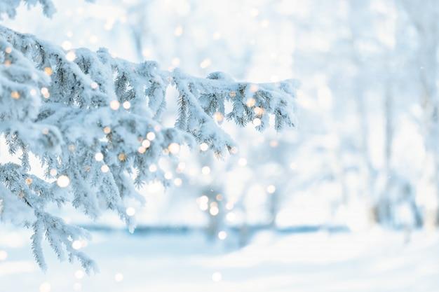 Рождественский фон со снежными елями